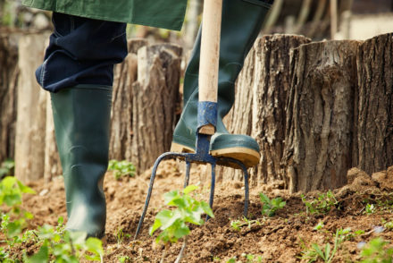 Spring garden concept. Gardener is doing garden work with hay fork. Garden work ** Note: Shallow depth of field