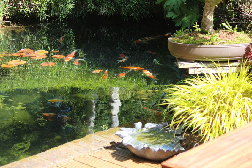 Photo showing a koi pond in a Japanese garden with some large koi carp fish swimming in the water, where reflections of the surrounding plants, bamboo and trees are also visible. The edge of the pond is lined with a row of red bricks, while timber decking provides space for a seating area.
