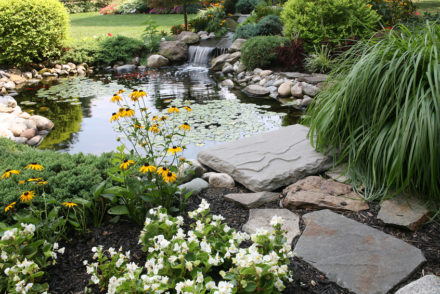 a pond in a residential yard complete with koi and waterfallClick on the thumbnail to discover more photos of backyard landscaping and ponds. Thanks!
